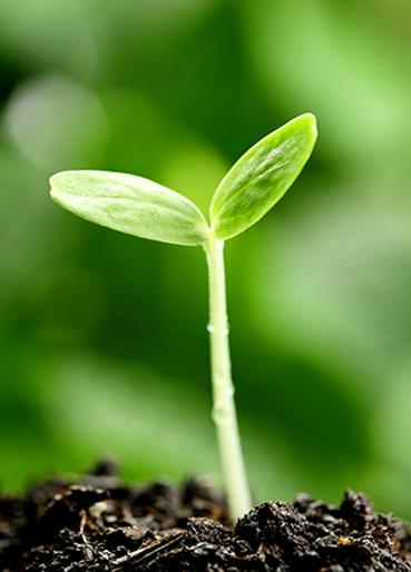 种子发芽到大树简笔画